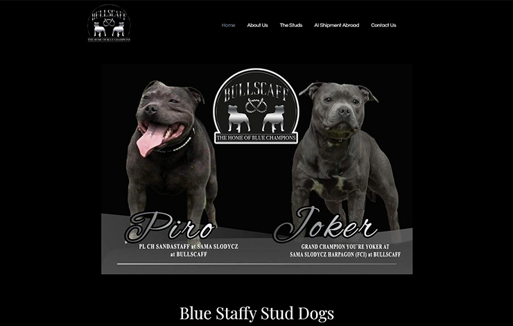 Website Design for Bullscaff | Champion Blue Staffy Stud Dogs