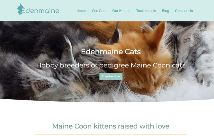 Website Design for Maine Coon Kittens for Sale in UK | Edenmaine