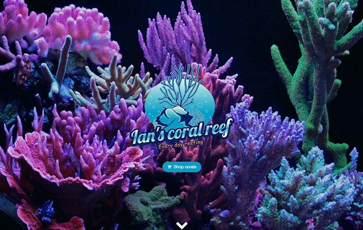 Website Design for Live coral for sale and coral care products | Ian's Coral Reef