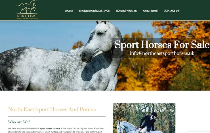 Sport Horses For Sale | North East Sport Horses