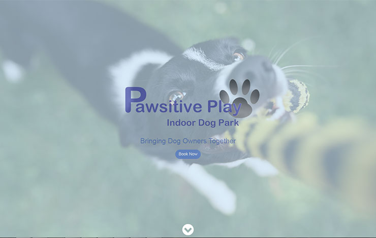 Indoor Dog Park Glasgow | Pawsitive Play Ltd