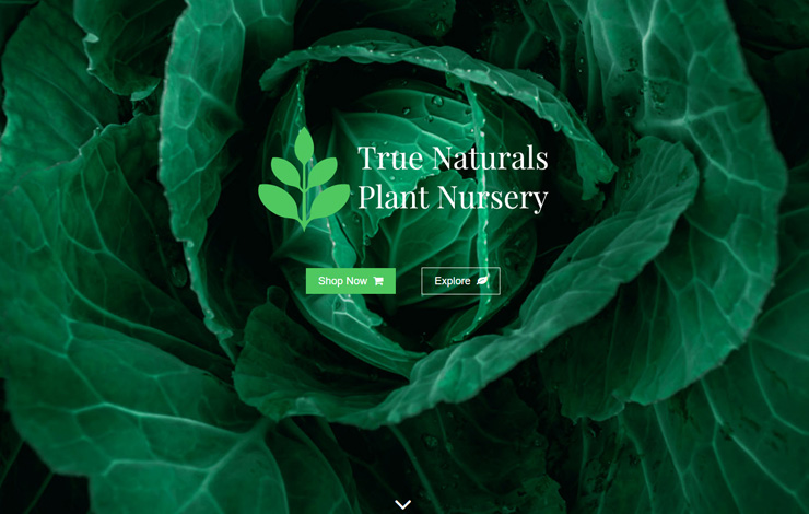 Website Design for Garden Ready Plant Delivery In Stanwick | True Naturals