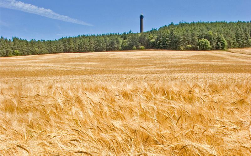 Autumn fields in the Scottish Borders. Peniel Heugh Monument near Jedburgh.