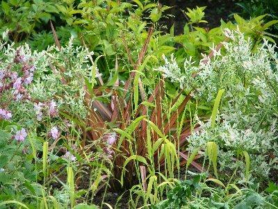 Milium effusum, Phormium, Salix and Geranium