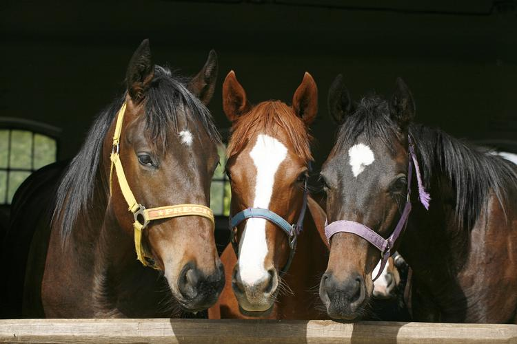 Keep up to date with deals and events running at The Mill House Riding Centre.
