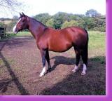 horse stud sports horses livery scotland