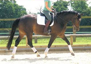 sports horses stud rachan scotland