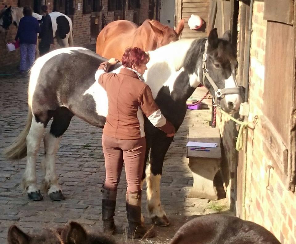 Vivian Woodruff Horse Healing Surrey