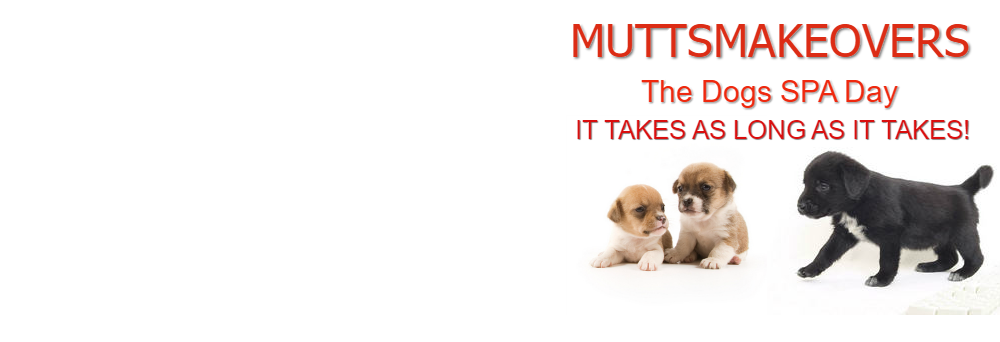 Dog Groomers In Harlow | Muttsmakeovers