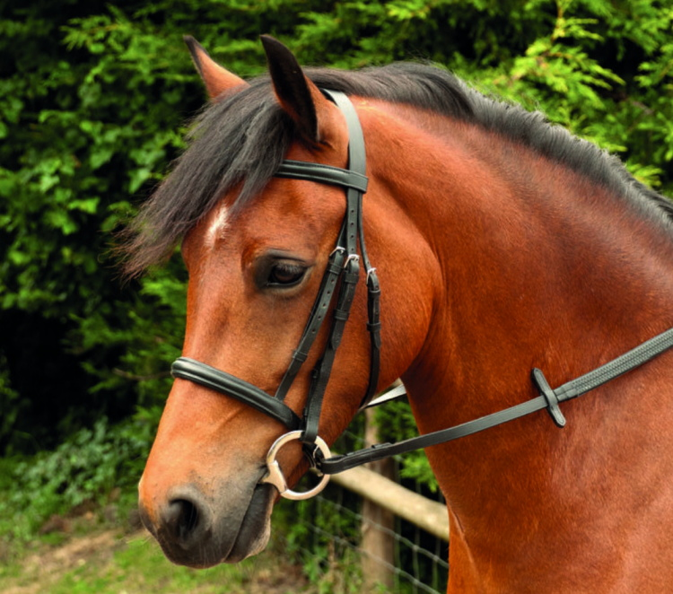 Windsor Leather Plain Bridle with Cavesson
