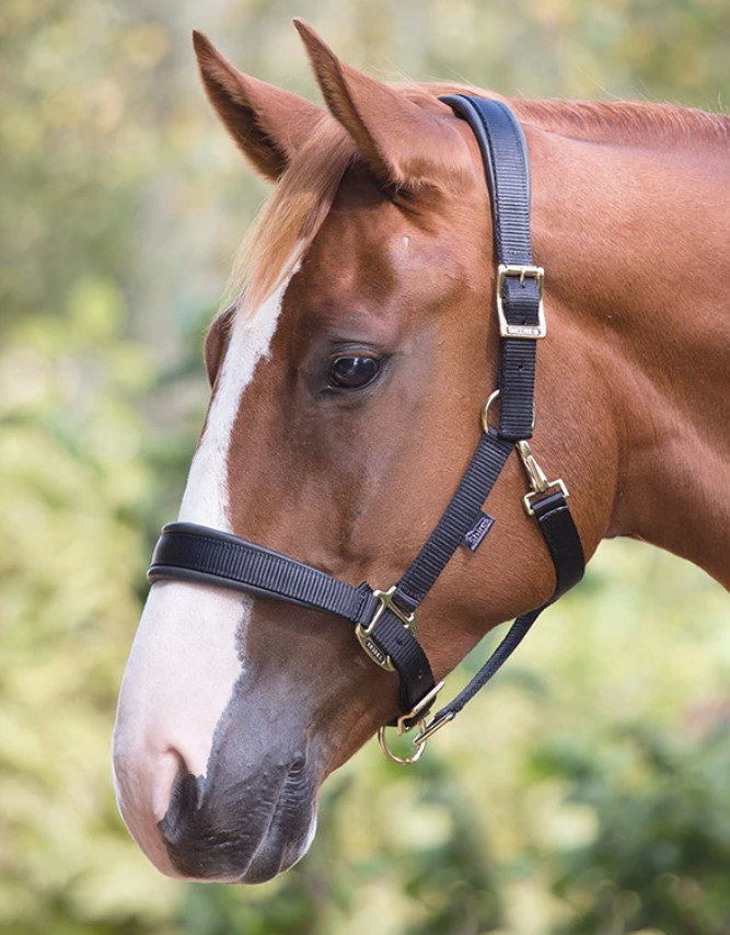 Shires Delux Padded Headcollar