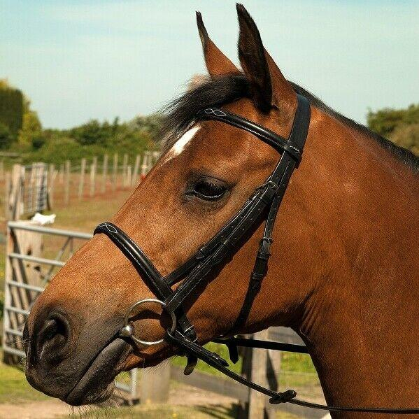 HERITAGE ENGLISH LEATHER BRIDLE WITH RAISED STITCHED CAVESSON NOSE AND BROW BAND