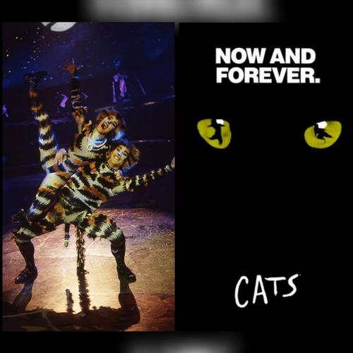 Cats will be streamed online - News The streaming will be for free this weekend