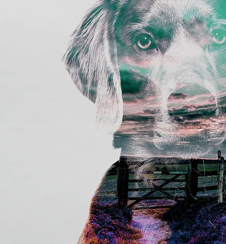THE DOG BENEATH THE SKIN – Review – Jeremy Street Theatre A political quirky fairytale