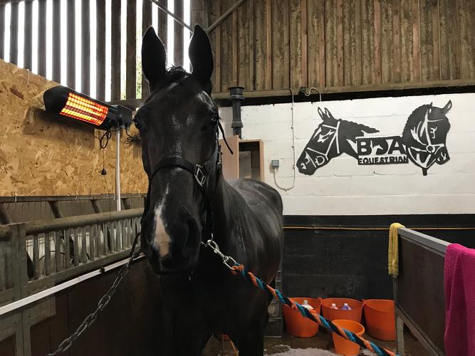Happy horses go home, new ones arrive @ BDA this week This week sees the arrival of some new equine faces at BDA, new yoga exercises, new heat lamps and signage!