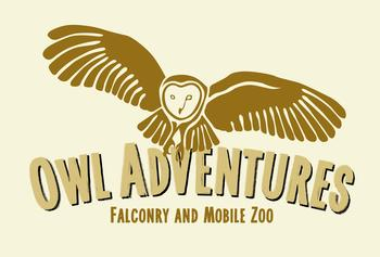 Owl Adventures Birds of Prey shows Yorkshire