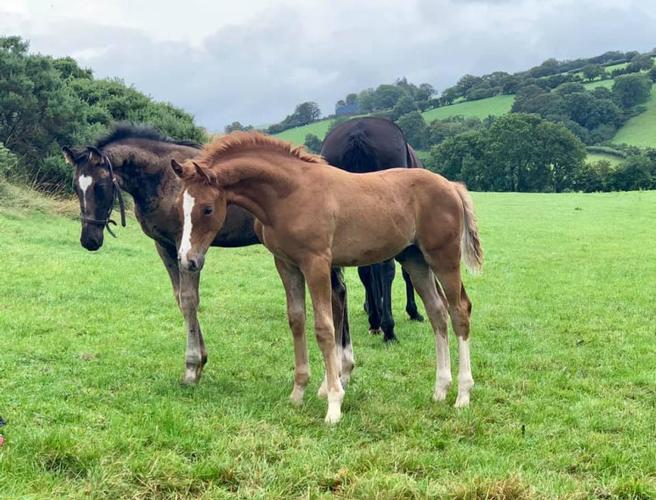 Welcome to our new Website - E M Sporthorses Introducing the Mares, Youngstock and Horses for sale at E M Sporthorses