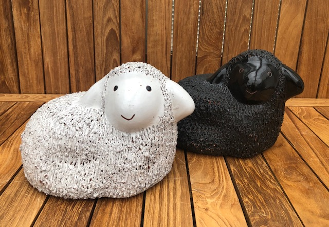 Sheep Black