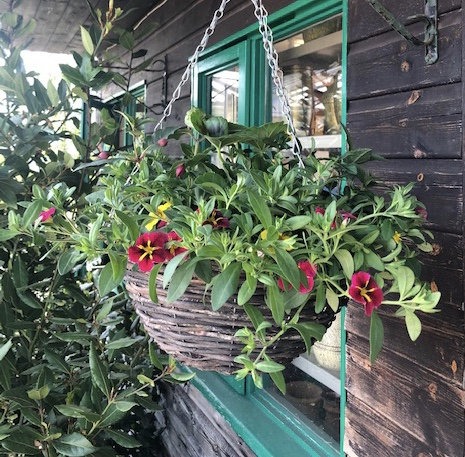Pre planted Hanging Basket