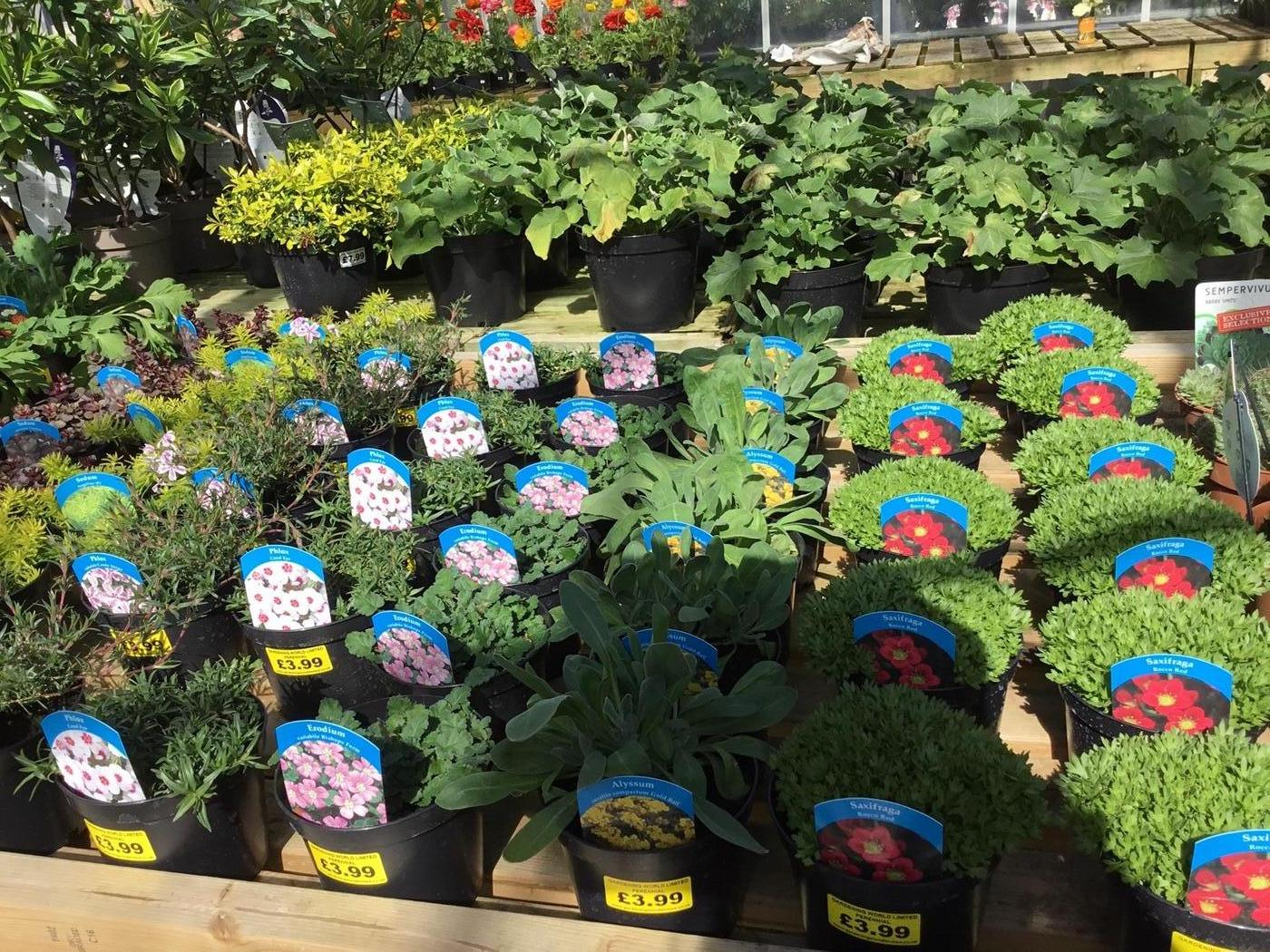 5 PERENNIAL ROCKERY PLANTS