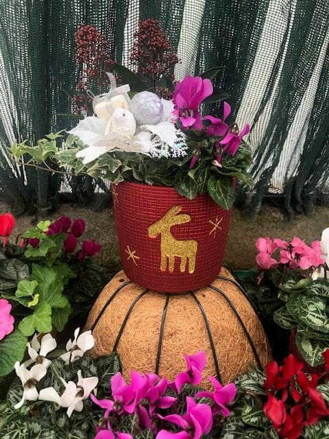 Reindeer Planted Christmas Pot