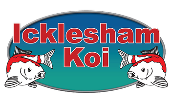 Icklesham Koi Pond and Koi Specialists East Sussex Rye