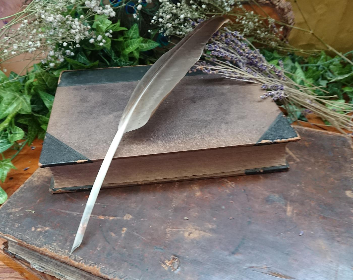 Wild Goose Feather Quill