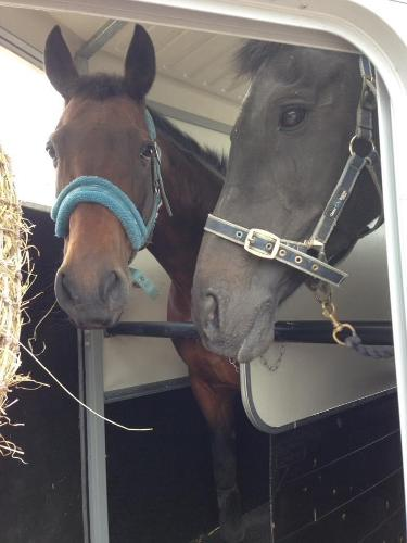 10 Towing Tips You are carrying precious cargo so it's important that you follow the rules. To keep both yourself and your horse safe when travelling.
