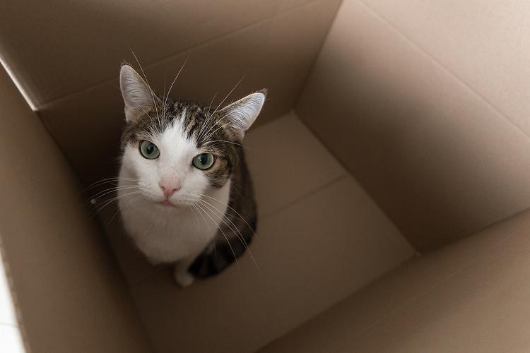 Pet Cat And 30K In Cash Among Bizarre Items Found By Home Removal Teams Moving house can be a busy and stressful time, so it is important to have a reliable removals company for those forgetful moments!