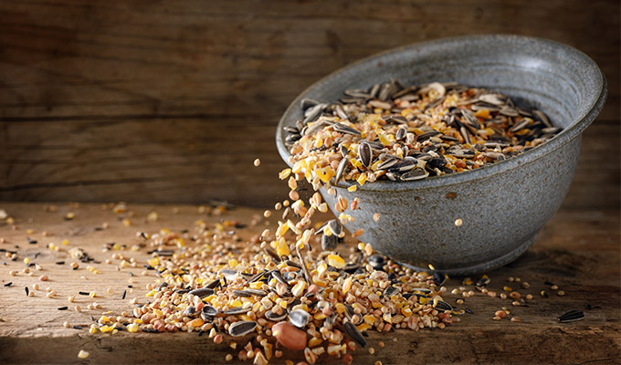 Bird Feed We stock everything you need to look after domestic or wild birds at your home.