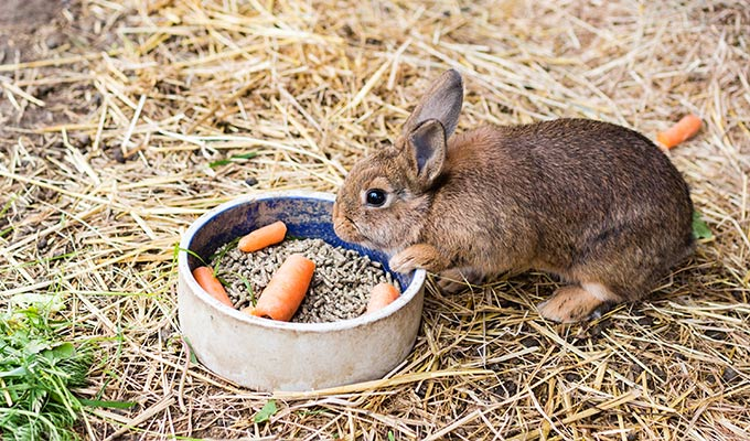 Small Animals Feed we supply all you need for looking after rabbits, guinea pigs, hamsters, mice, rats, ferrets and tortoises.