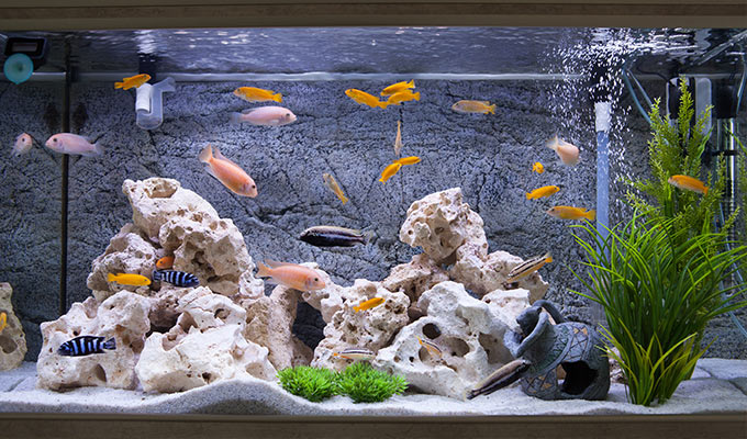 Aquatics We supply all the gravel, food, ornaments, plants and treatments you need to create a happy environment for your fish.
