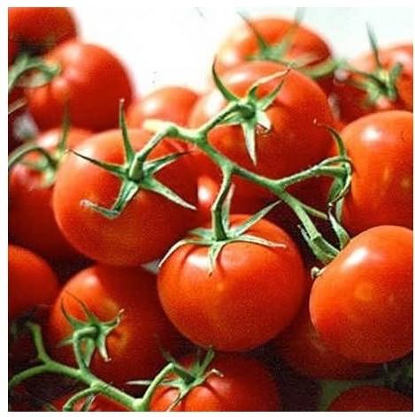 Tomato - Ailsa Craig