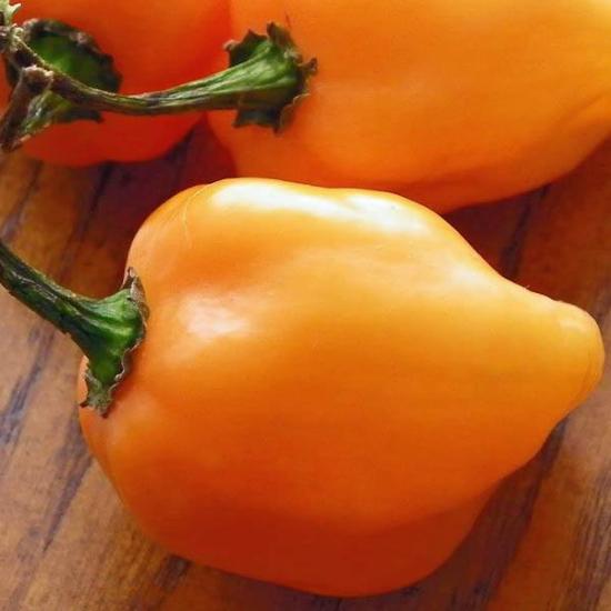 Habanero Magnum Orange