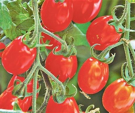Tomato - Red Alert